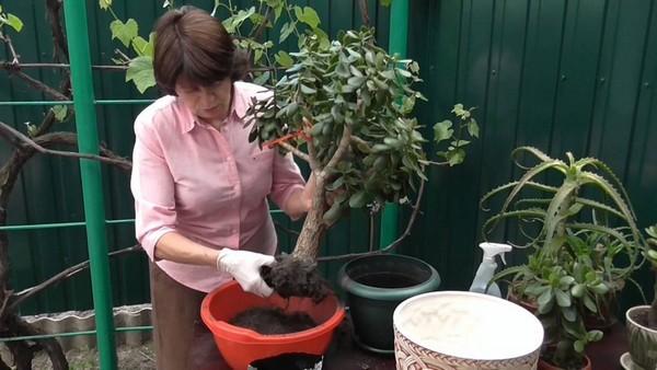 Высаживать комнатные растения в горшки, кашпо или контейнеры
