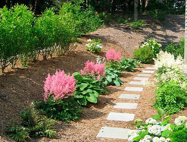 Мульчирование для астильбы очень важно – это позволяет защитить растение от жары или холода, сохранить влагу в почве