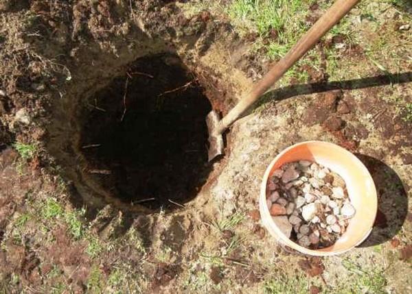 Предварительно нужно заготовить яму глубиной в метр, а на ее дно уложить дренажный слой