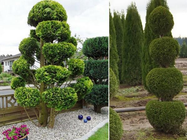 Туя – растение, которое прекрасно поддается стрижке. Имея навыки, можно придать растениям различные формы: спирали, шары и проч.
