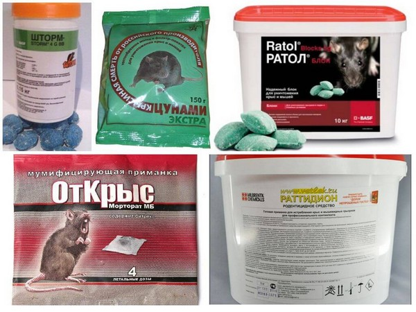 Специальные ядовитые препараты обладают манящими для грызунов запахом и вкусом
