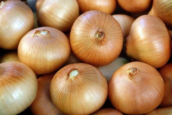 Сорта лука разделяют в зависимости от размера луковиц, количества зачатков, периода вегетации