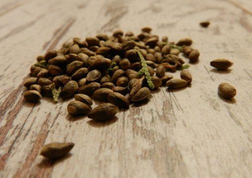 Высаживать семена можно и осенью, но тогда емкости накрывают лутрасилом