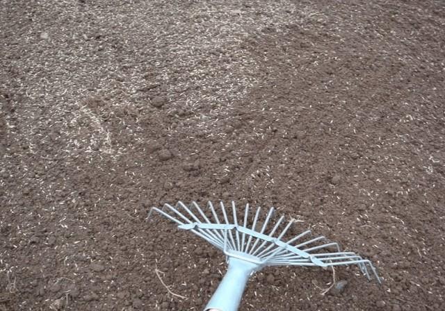 Перемешивание семян с почвой веерными граблями