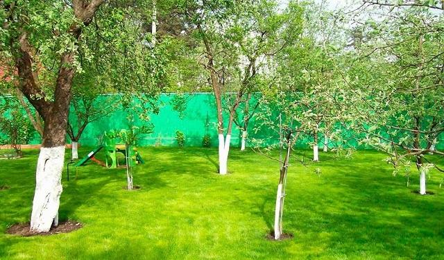 Чаще всего в хозяйствах «среднего достатка» владельцы сами выращивают газон и в дальнейшем ухаживают за ним.