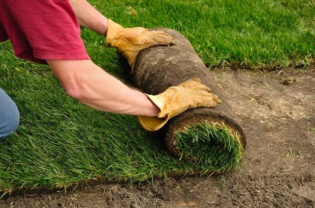 Укладка рулонного газона – для такой «озеленительной операции» лучше сего пригласить специалистов.