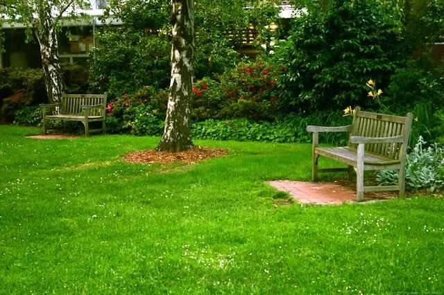 Садово-парковый обыкновенный газон