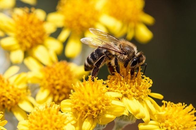 Там, где растут цветущие растения, там обязательно вьются пчелы и осы. Иногда такое близкое соседство становится не особо комфортным для проживающих в доме.
