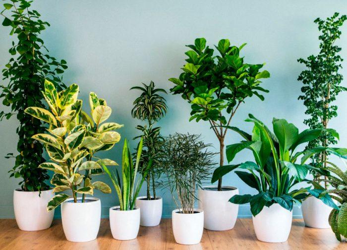 Держите в доме живые растения
