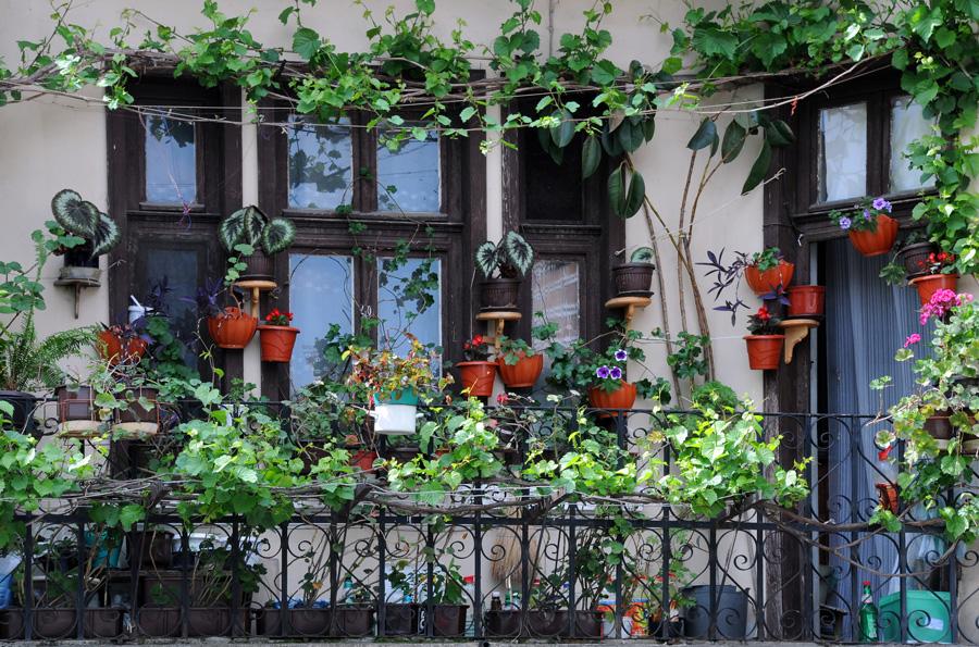 Кованые перила — хорошая опора для вьющихся растений