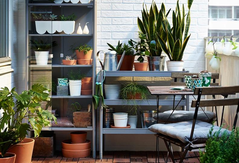 Уголок садовода на вашем балконе