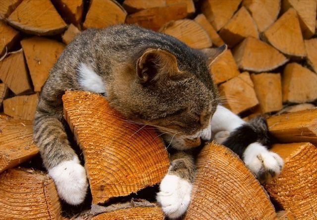 Каждый из сортов дров обладает собственными характеристиками
