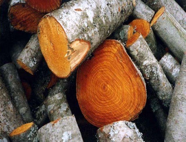 Ольховые дрова внешне не спутаешь ни с какими другими