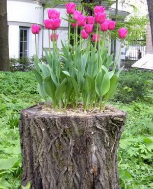 Цветы на старом пне