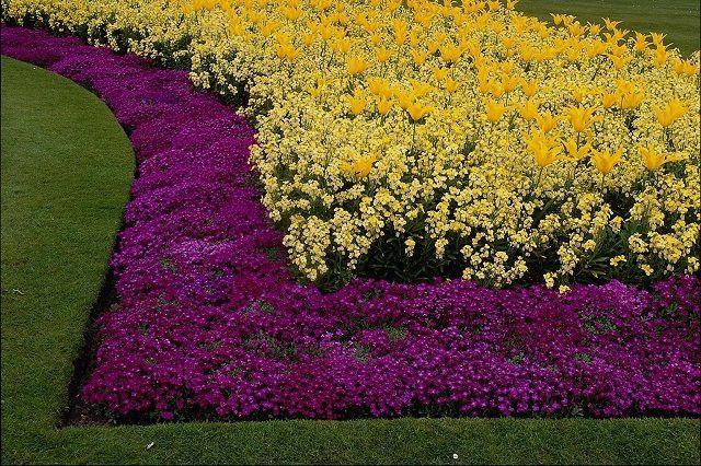 Цветочный бордюр не должен сильно подниматься над газоном