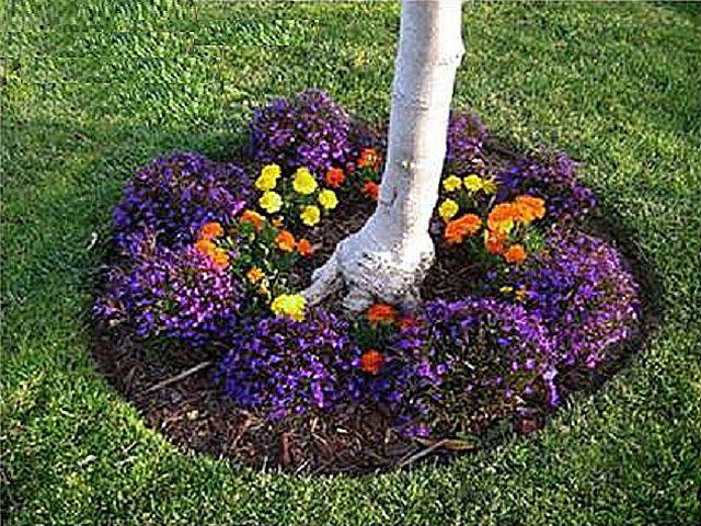 Около каждого деревца можно организовать круговую клумбу