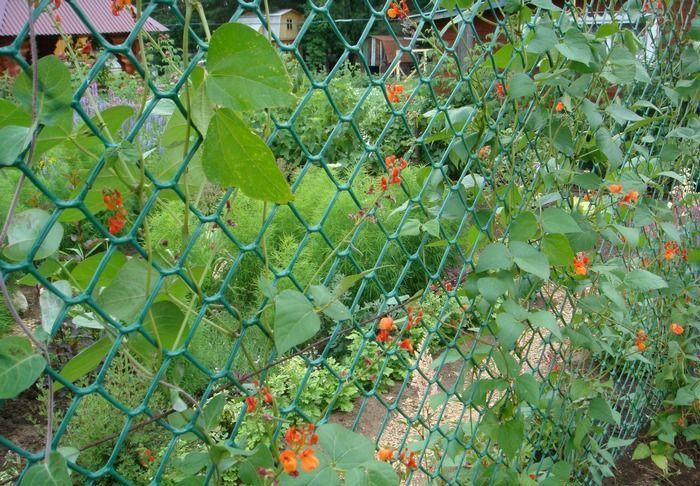 Растения держатся за сетку