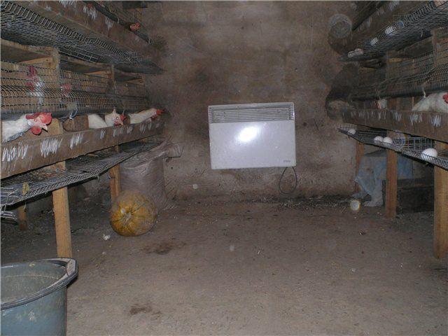 Самое лучшее решение для отопления курятника - электрические конвекторы