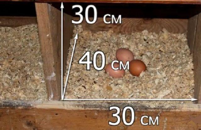Размер гнезда для несушки