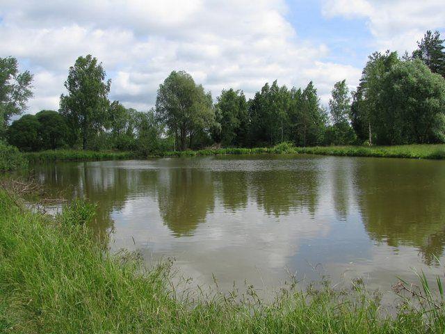 Большой удачей для любого дачника является наличие поблизости естественного водоема