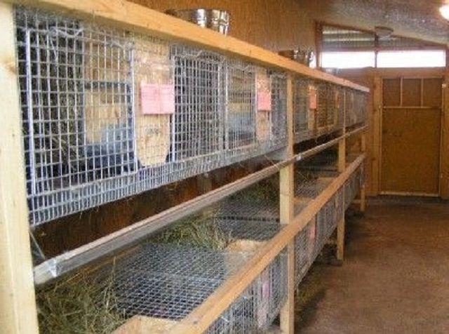 Крольчатник, размещенный в сарае