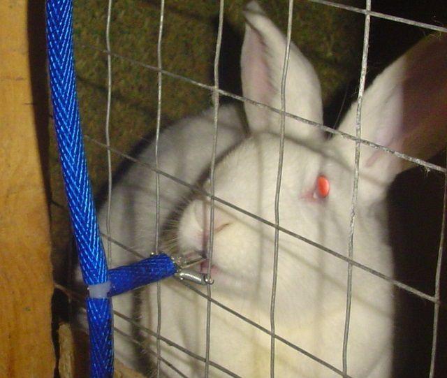 Кролики постоянно должны иметь доступ к чистой воде