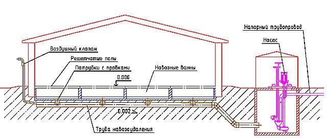Примерная схема механизированного удаления навоза с крупного свинарника