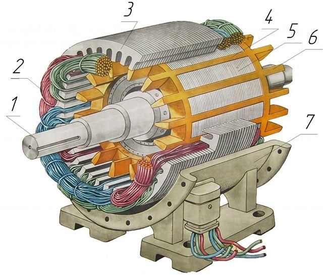 Трехфазный асинхронный двигатель с короткозамкнутым ротором в разрезе