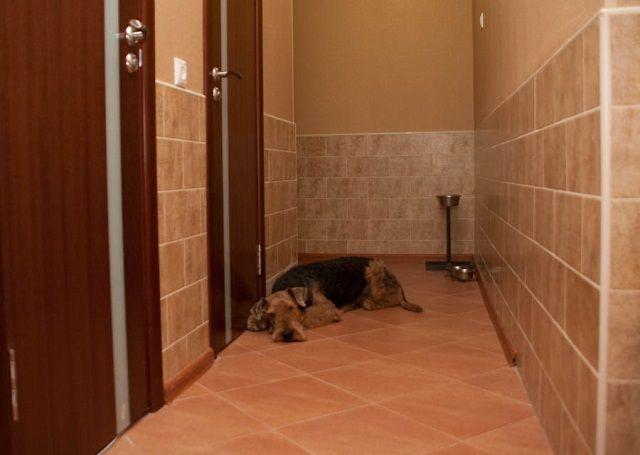 Такой отделке стен не страшны шалости домашних любимцев