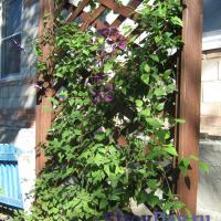 Деревянная садовая решётка (шпалера) своими руками