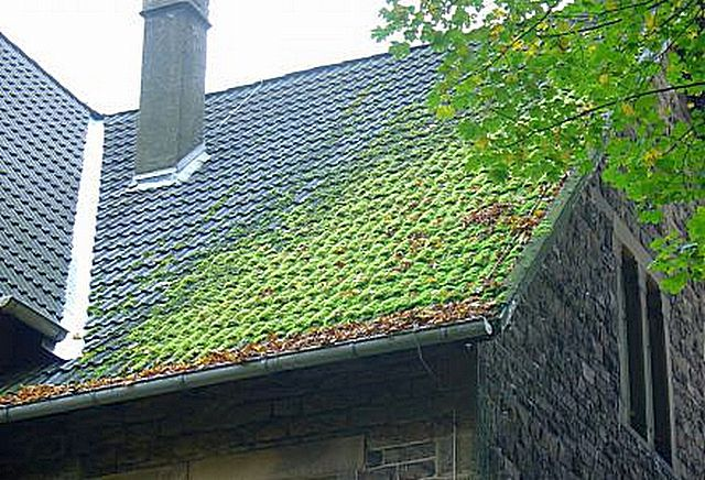 Заросли мха на крыше могут представлять серьёзную проблему, но вряд ли такой недостаток можно поставить в вину композитной черепице – он больше присущ керамической