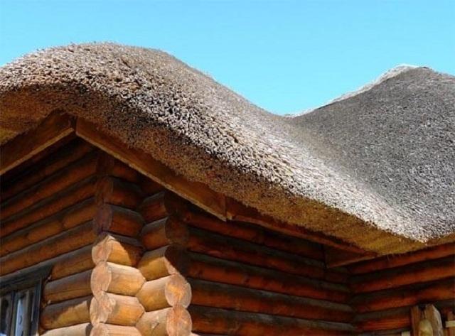 Так выглядит крыша, покрытая камышом «под щетку»