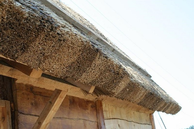 Особого внимания всегда требует правильное оформление выступающих карнизных свесов камышовой крыши