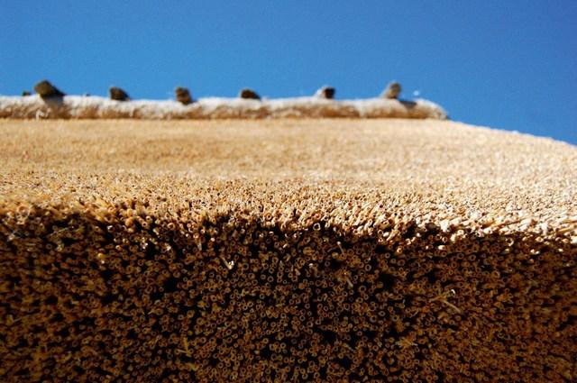 Толстый слой камыша, обладающего трубчатой полой структурой, воздухонаполненные промежутки между стеблями – что еще может быть лучше для высокоэффективной термо- и звукоизоляции?!